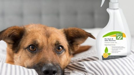 Eco-friendly Pet Stain Removers For Accidents