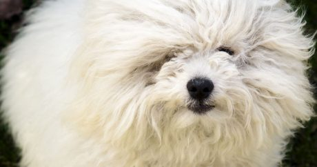 Funny (but real) dog breeds