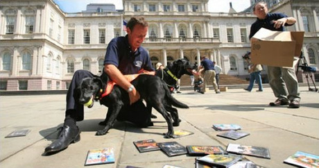 Sniffer dogs foil DVD pirates