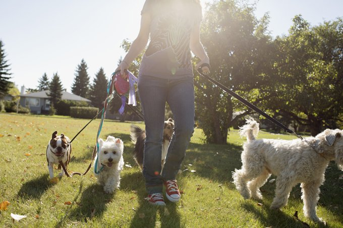 Woman walking dogs in sunny park