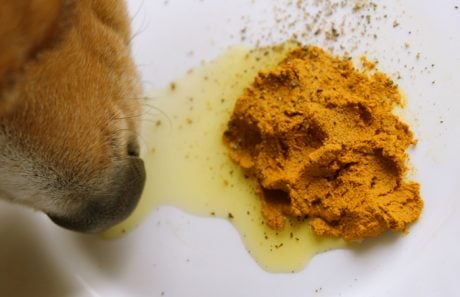 Nutritional Supplements For Dogs