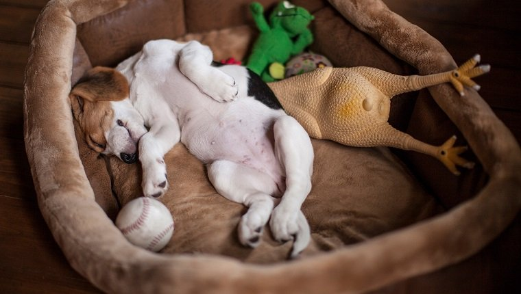 Dog Beds Everything You Need To Know Dogtime