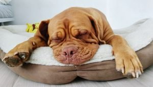 Dog Beds–Everything You Need To Know