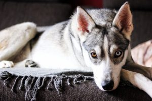 Your Dog's Coat 101: Health, Hot Spots, Shedding, Issues