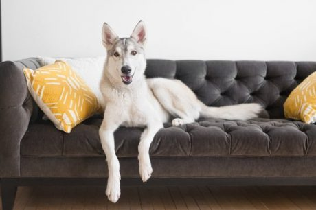 Landlords And Pets: What To Know Before You Sign A Lease