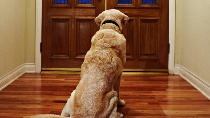 dog waiting at door