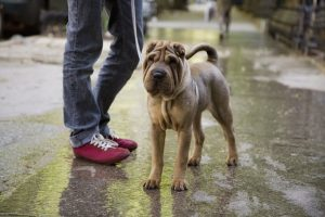 Your Dog's Skin 101: Health, Hot Spots, Problems