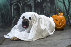 Halloween Party Games For Dogs