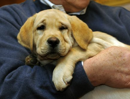 Labrador Retriever Dog Names