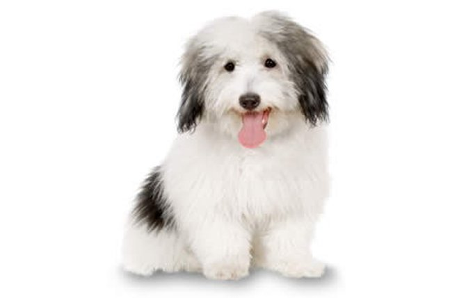 White House Dog Breed