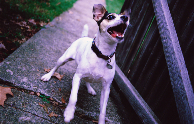 Dog Barking Remedies
