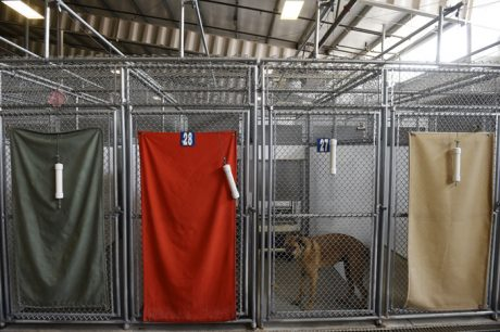 Dog Kennels: When You Can't Bring Them With You
