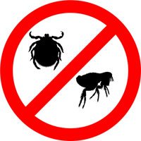 Fighting and preventing flea infestations