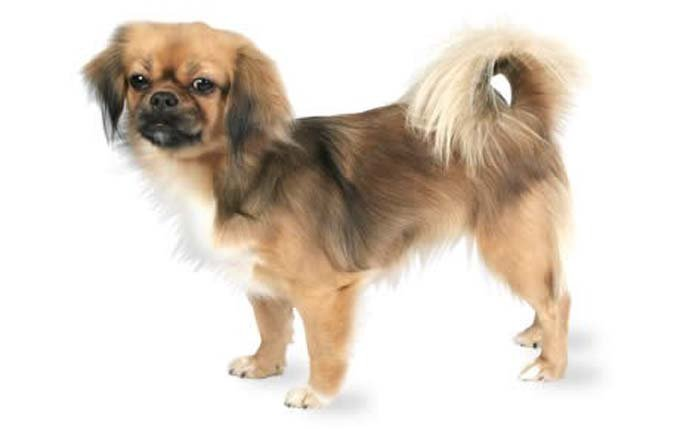 Mixed Breed Dogs Akc