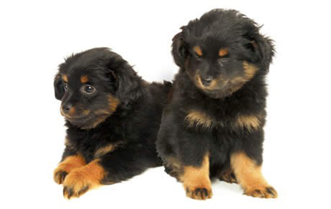 Good Small Dogs To Own