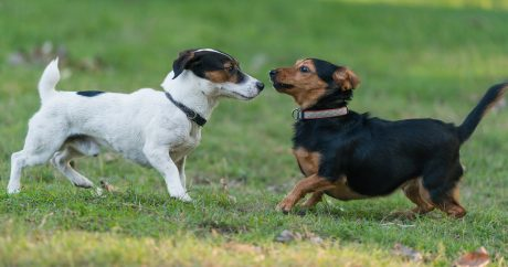 Why Small Dogs Should Give You Pause