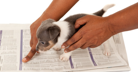 When You Get A New Puppy One Of The First Things On The List Is House  Training Your Puppy. Your Canine Newcomer Is Just Itching To Learn  Household Manners.