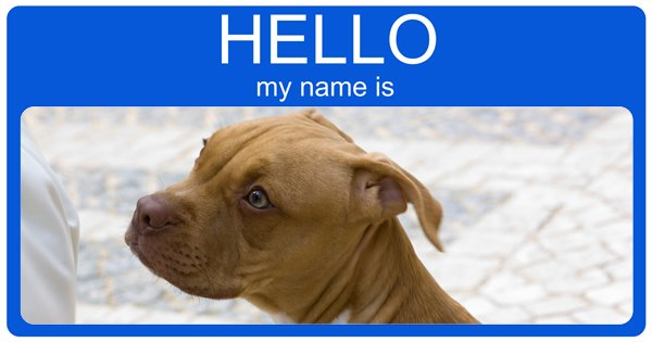 Cute Boy Dog Names For Pitbulls