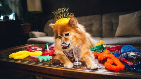 6 New Years Resolutions Your Dog Wishes You'd Make