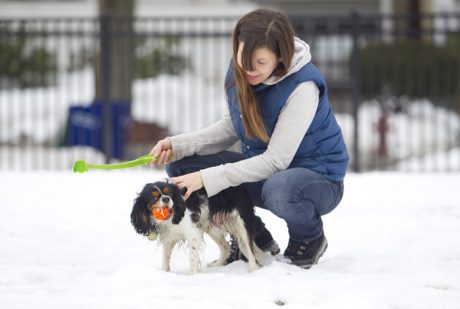 Your Dog's Heart: Keep It Healthy