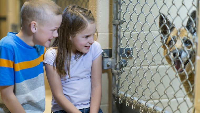 Kids adopting a dog from the animal shelter.