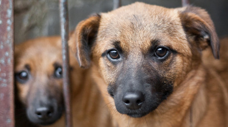 Puppy sale = puppy mill? - Dogtime