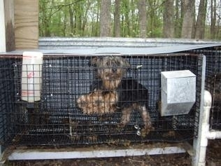 Missouri's anti-puppy mill proposition — and the breeder who opposes it