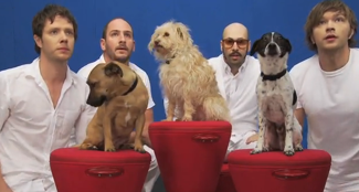 OK Go: Helping Dogs With A Beat You Can Dance To