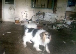 Lucky has been locked in a basement for years — HELP FREE HIM