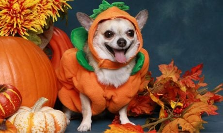 DogSpeak: Halloween And Your Dog