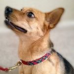 Eco-friendly dog collars and leashes