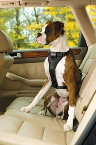 Product Revew: Kurgo Tru-Fit Smart Harness with Seat belt tether