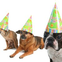 Dog Surprise Party