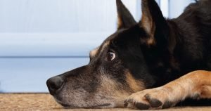 Treating your pet's separation anxiety