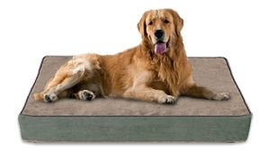 Buddy Beds For Orthopedic Hip Dysplasia Relief