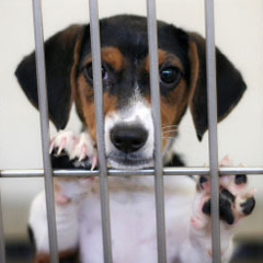 Contact RescueGroups