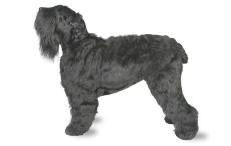 14 Dog Breeds Youve Never Heard Of but Will Soon