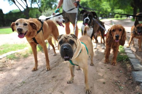 Careers, Jobs, And Other Ways To Work With Dogs