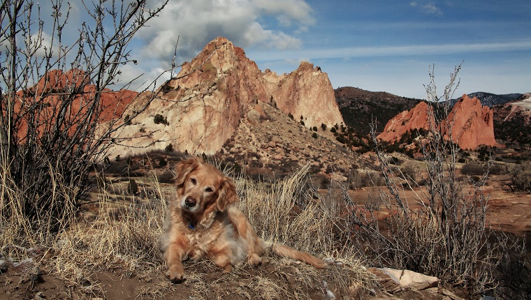 A Golden Retreiver lies in front of the Garden of the Gods park.