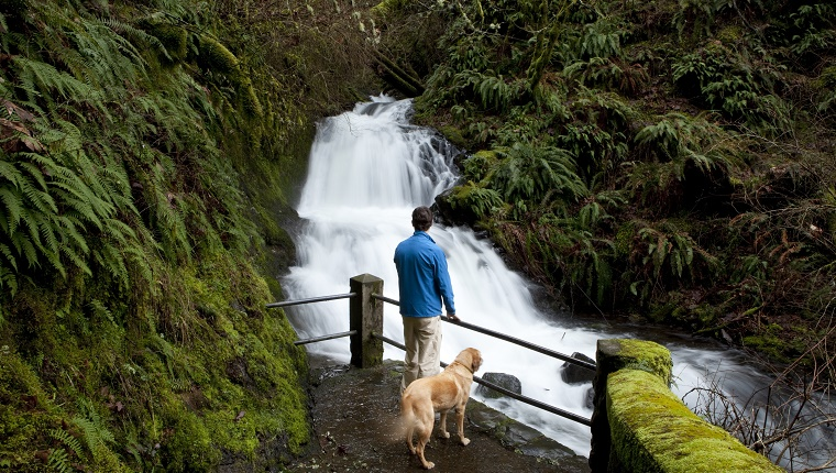 A man walks his dog to a waterfall in the woods.