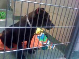 Tuesdays with stories: hope for shelter dogs