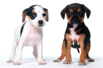 Handling and gentling your puppy