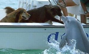 How dolphins saved a dog named Turbo