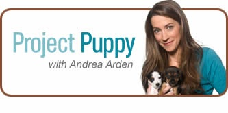 Handling: Prepare puppy for vet exams and grooming