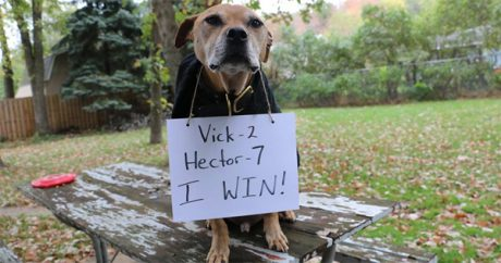 Former Vick dog Hector visits fellow abuse survivors