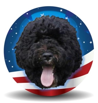Bo Obama Dog Blog