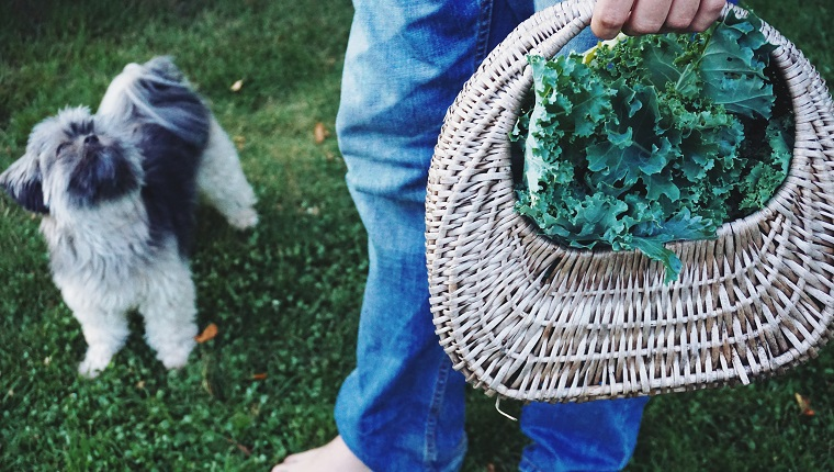 dog with basket of vegetables