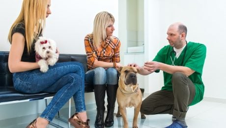 New Years Resolutions For Your Pet: Regular Vet Visits