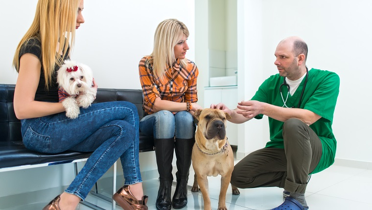 Owners Sitting In Vets Reception Area. Make new years resolutions to visit the vet more.