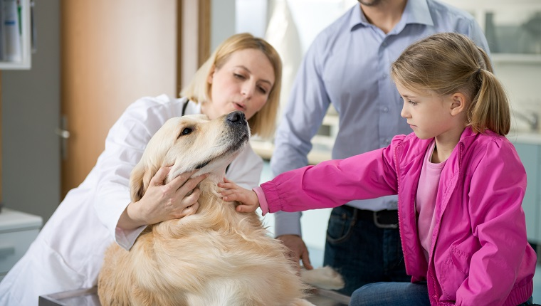 A female veterinarian talking to a dog owner about the pet's health.